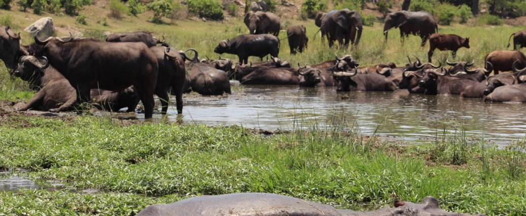 Kruger National Park Baby Season